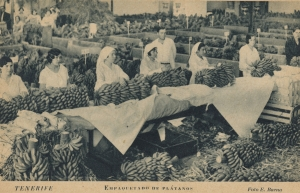 Empresa exportadora de plátanos